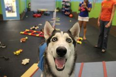 In Naples, bring Fido to Fido's Gym for a day of socialization, training, or just good ol' fashion fun!