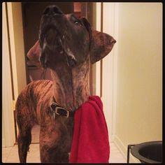 3.7.2013 #doggy #slobber