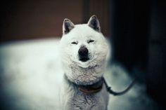 This cutie looks happy :)