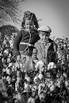 cotton field...