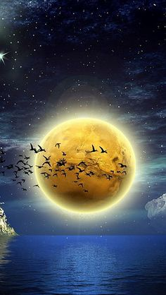 8/19/15  9:47p  Moon Bat  Birds Water Reflection  vadaka1986 flickr.com