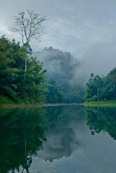 Mist is hanging over the lake this morning in #KhaoSokNationalpark find out more at www.khaosoklake.com