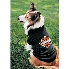 Perfect for motorcycle AND dog enthusiasts. :) #Harley #dog