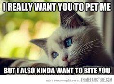My cat exactly!!