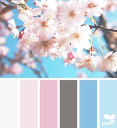 Here are 25 spring color palette options from Colourlovers and Design Seeds. You may use these palettes in creating designs for this season. Spring Color Palette, Pastel Colour Palette, Colour Pallette, Spring Colors, Colour Schemes, Pastel Colors, Color Patterns, Design Seeds, Color Swatches