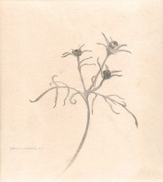 image of still-life goldpoint and silverpoint drawing Cosmos by David Ladmore