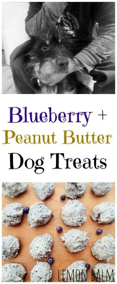 Quick and easy, these Blueberry + Peanut Butter Dog Treats are a healthy treat your dog will love!