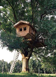 Baumhaus von Baumraum