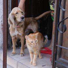 Where are you looking for? どこ見てるんですか 犬の表情が渋い  # #かわいい旅 #cuba #kuba #キューバ  #havana #habana #lahabana #lahavana  #ハバナ #travel #trip #portrait #cubana  #ポートレート #photo #写真 #canon #eos #6d #world #中米 #traveler #一人旅 #犬 #猫 #dog #cat #perro #gato by kaz_diciembre11