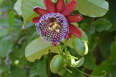 Eksotiske blomster