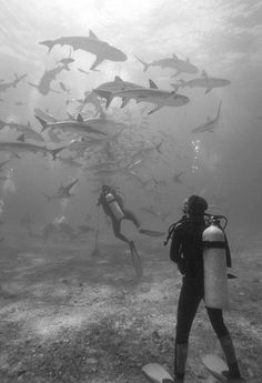 Walker's Cay Sharks Photo by Michael Monfore -- National Geographic Your Shot