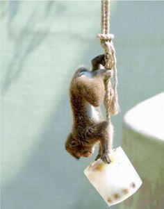 Photos of monkeys (8 photo)