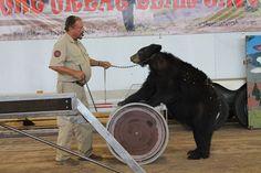 Captive Bears
