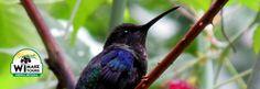 Avistamiento de aves en San Lorenzo en la Sierra Nevada