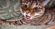 Mijn kat is knettergek geworden!