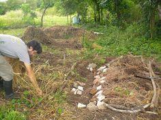 Cantero sobreelevado y cosecha manual de la parcelita de trigo en Los Carayá