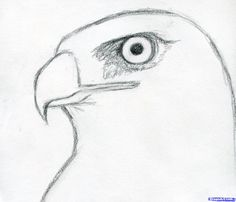 how to draw a hawk red tailed hawk step 4