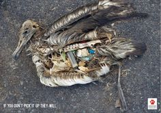 Endangered Wildlife Trust : If you don't pick it up they will.