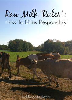 Raw Milk Rules: How To Drink Responsibly Mini Farm, Mini Cows, Future Farms, Homestead Survival, Homestead Farm, Hobby Farms, Animals And Pets, Raising Farm Animals, Raising Chickens