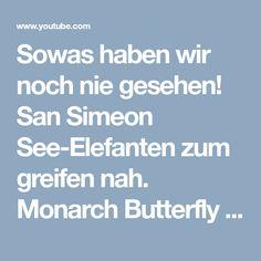 Sowas haben wir noch nie gesehen! San Simeon See-Elefanten zum greifen nah. Monarch Butterfly - YouTube
