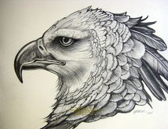 vulture pencil and pen drawings - Google Search