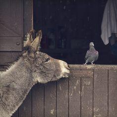 pigeon do ya wanta be friends?