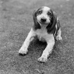 Google Image Result for http://www.psdeluxe.com/wp-content/uploads/2010/06/animals_smile/smiling_dog_black_and_white.jpg