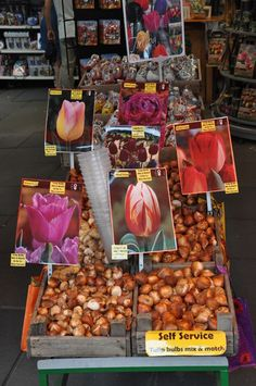 Floating Flower Market Amsterdam. Photo Courtesy of Arttown