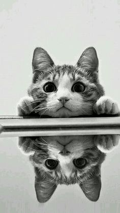 Shared by shopforpaws.com. Love this #kitty reflection:)
