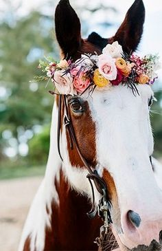 i wish i was as beautiful as this horse