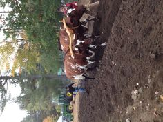 Plowing with oxen, Fryeburg Fair, Maine