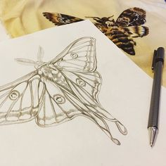 Drawing out my next hoop art design. A Moon #Moth #bugembroidery #broderie #needlework #needlepainting #stitchersofinstagram #embroideryinstaguild #hoopart #embroiderydesign