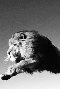 Amazing Animals #8 | InspireFirst