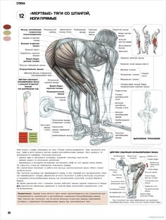The ANATOMY of Stiff Leg Deadlift. The stiff-legged deadlift is a variation whereby the knees are only slightly bent and not moved during the exercise, comp Weight Training Programs, Weight Training Workouts, Workout Programs, Strength Training Women, Strength Training Program, Powerlifting Training, Weightlifting, Shoulder Workout, Bodybuilding Workouts