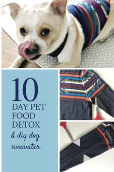 10-Day Dog Detox with Supreme Source® Dog Food & Tutorial for an easy 2-step dog sweater!  #SuperFoodSwitch, #IC AD  https://elleoliveco.com/2018/04/pet-health-a-dog-detox/