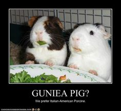 gonna overlook the mispelling of guinea pig lol...