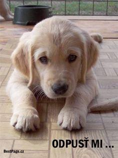 Zamilované obrázky,láska na profil,facebook Profil Facebook, Animals And Pets, Cute Animals, Love Is Sweet, Labrador Retriever, Dogs, Motto, Art, Pretty Animals