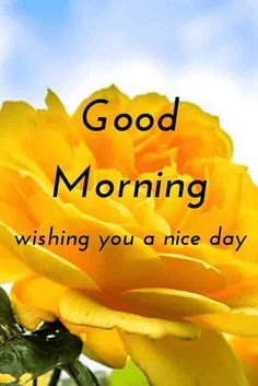 morning photos with yellow rose Good Morning Romantic, Good Morning Beautiful Pictures, Good Morning Nature, Good Morning Dear Friend, Good Morning Kisses, Good Morning Msg, Good Morning Flowers, Good Morning Photos, Morning Pictures