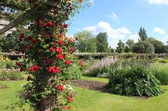 Stop and smell the roses at Kew Gardens. | 17 Things You Must Do When The Weather's Nice In London