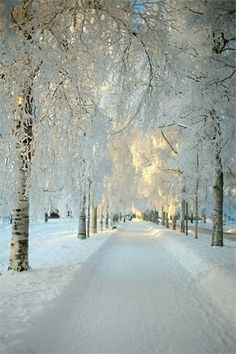 A Beautiful Snowy Road with Trees [5 Pictures] | See More Pictures