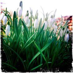 voorjaar in Zutphen