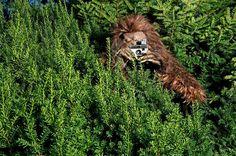 Bigfoot is elusive.