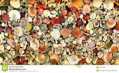 Seashell mosaics - Google Search