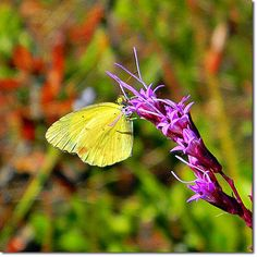 Friendly Pollination Practices -- If You Plant It, They Will Come