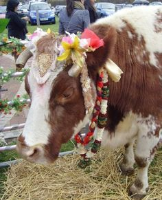 The UK's Most Expensive Milk..From the World's Happiest Cows? : TreeHugger #milk #cows
