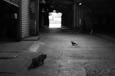 cat-black-and-white-photography-111