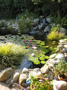 backyard pond with great cover from those waterlilies. Repinned by www.watersidenursery.co.uk (uk pond plant specialists)