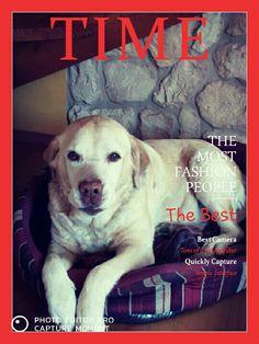 Yuma, il piú bel labrador mai esistito.