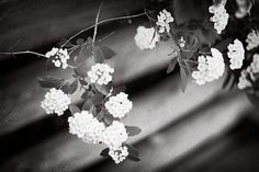 black and white photography white flowers by sandraarduiniphoto, $25.00