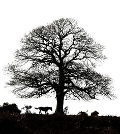 The New Forest, Hampshire UK, some of the old trees here are just magical, fab pic Hampshire Uk, Old Trees, Somewhere Over, Our Town, New Forest, Over The Rainbow, The Magicians, Coast, Old Things